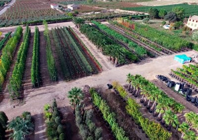 Aerea Viveros Ebro 01