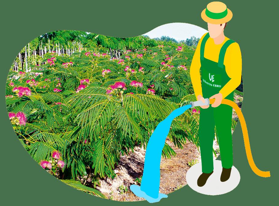 Foto arbustos ornamentales