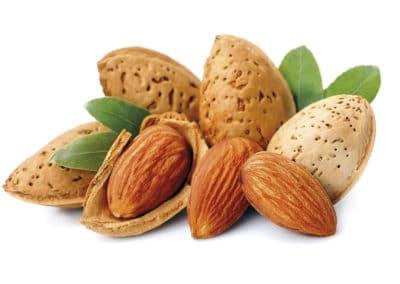 Prunus-dulcis-Almendros